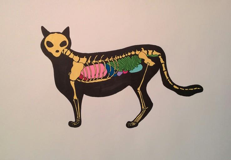Anatocat